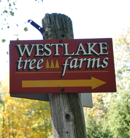 Image: Westlake Tree Farms